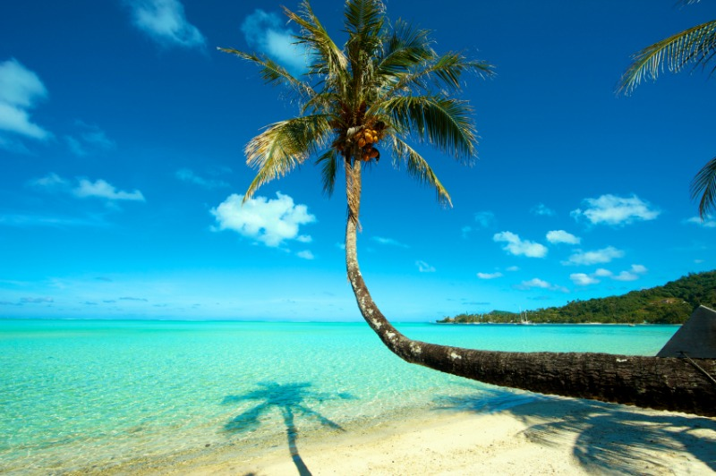 Take Me to Tahiti